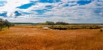 Panorama di autunno della canna gialla Fotografie Stock Libere da Diritti