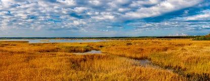 Panorama di autunno della canna gialla Immagini Stock
