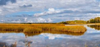 Panorama di autunno della canna gialla Fotografie Stock