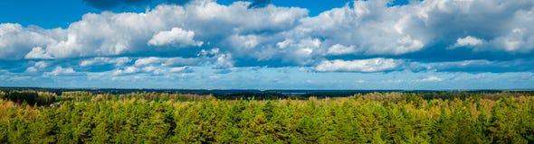 Panorama di autunno della foresta verde Immagine Stock