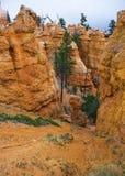 Panorama di Bryce Canyon negli Stati Uniti Immagini Stock Libere da Diritti