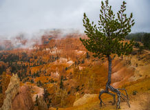 Panorama di Bryce Canyon negli Stati Uniti Immagine Stock
