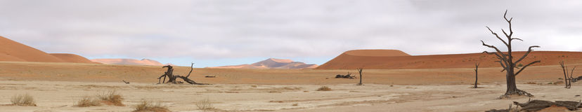 Panorama di Deadvlei Fotografia Stock Libera da Diritti