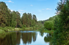 Panorama di estate della foresta con un lago, Fotografia Stock