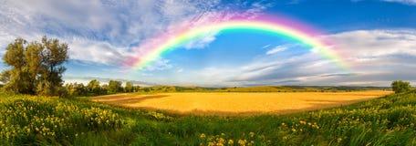 Panorama di grande campo di estate Fotografia Stock