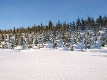 Panorama di inverno Fotografie Stock Libere da Diritti