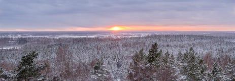Panorama di inverno di paesaggio con gli alberi ed i campi - tramonto Immagine Stock Libera da Diritti