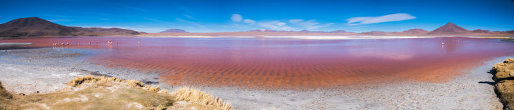 Panorama di Laguna Colorada Fotografia Stock