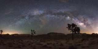 Panorama di modo di Joshua Tree National Park Milky Immagini Stock