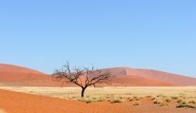 Panorama di Namib Immagini Stock Libere da Diritti