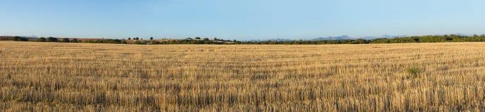 Panorama di paesaggio agricolo piano con le foreste e la montagna Fotografie Stock Libere da Diritti