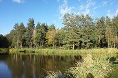 Panorama di piccolo stagno ben tenuto nella foresta di conifere immagini stock