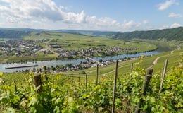 Panorama di Piesport sul Mosella Germania Fotografia Stock