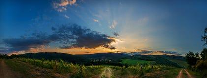 Panorama di tramonto della vigna Fotografie Stock Libere da Diritti