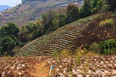 Panorama di un giardino su un'alta montagna Fotografia Stock