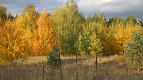 Panorama di una foresta in autunno metraggio archivi video