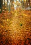 Panorama di verticale del fondo dell'estratto del percorso del parco di autunno di stagione di caduta Fotografia Stock