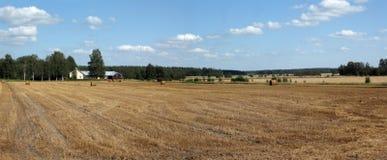 Panorama do campo Foto de Stock Royalty Free