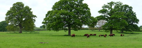 Panorama do campo Fotos de Stock Royalty Free