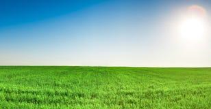 Panorama do campo de grama sob o céu azul e o sol Foto de Stock Royalty Free