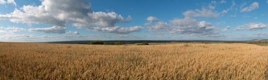 Panorama do campo de milho Imagens de Stock