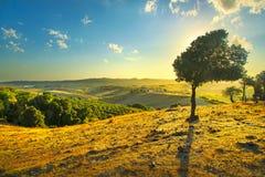 Panorama do campo de Toscânia e oliveira ventosa no por do sol Pisa, Italy imagens de stock royalty free