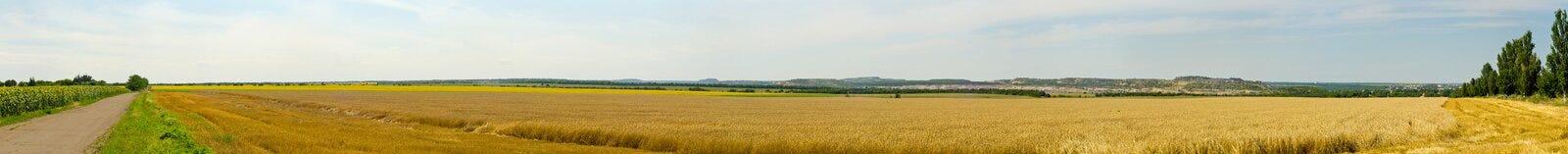 Panorama do campo de trigo Imagens de Stock