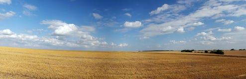 Panorama do campo do verão Imagem de Stock Royalty Free