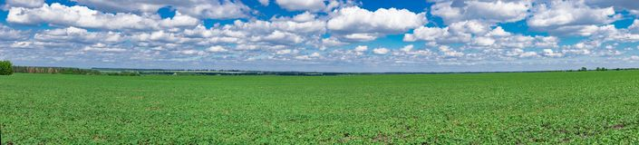 Panorama do campo do feijão de soja Imagens de Stock Royalty Free