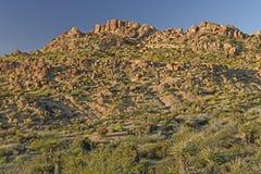 Panorama do deserto na luz da noite Foto de Stock