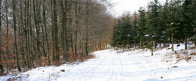 Panorama do inverno Fotografia de Stock Royalty Free