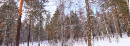 Panorama do inverno Imagens de Stock Royalty Free