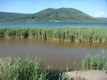 Panorama do lago de Vico no Latium em Itália com algumas plantas altas internas e montanhas afinal Foto de Stock Royalty Free