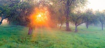 Panorama do nascer do sol fotografia de stock