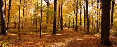 Panorama do outono Fotografia de Stock