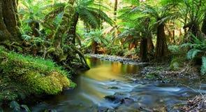 Panorama do rio da floresta húmida Imagens de Stock Royalty Free