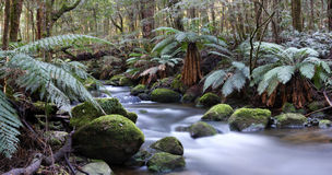 Panorama do rio da floresta húmida Imagens de Stock