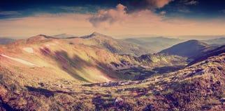 Panorama do vintage da paisagem com flores Imagem de Stock
