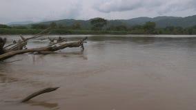 Panorama | Dode Rivier Duidelijke Bomen, Colombia stock footage