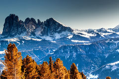 Panorama of the Dolomites with snow-capped peaks. And conifers Royalty Free Stock Photos