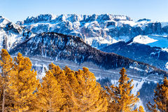 Panorama of the Dolomites with snow-capped peaks. And conifers Stock Image
