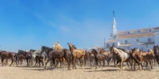 Panorama dos cavalos que correm antes do batismo EL Rocio Fotos de Stock
