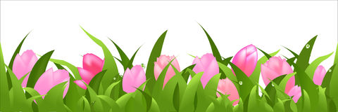 Panorama dos Tulips Fotografia de Stock Royalty Free