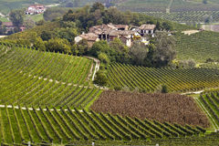Panorama dos vinhedos Foto de Stock Royalty Free