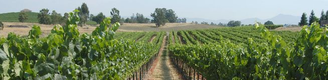 Panorama dos vinhedos imagem de stock