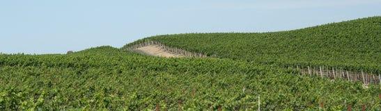 Panorama dos vinhedos imagens de stock
