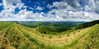 Panorama dos vinhedos e dos montes na área de Motovun Imagens de Stock