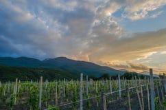 Panorama dos vinhedos no por do sol Fotografia de Stock Royalty Free