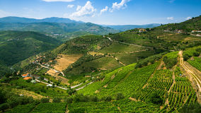 Panorama of the Douro Valley, Portugal. Vineyards on a hills royalty free stock photos
