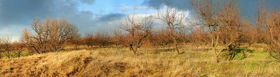 Wiosen drzewa z dramatycznym niebem Obraz Stock